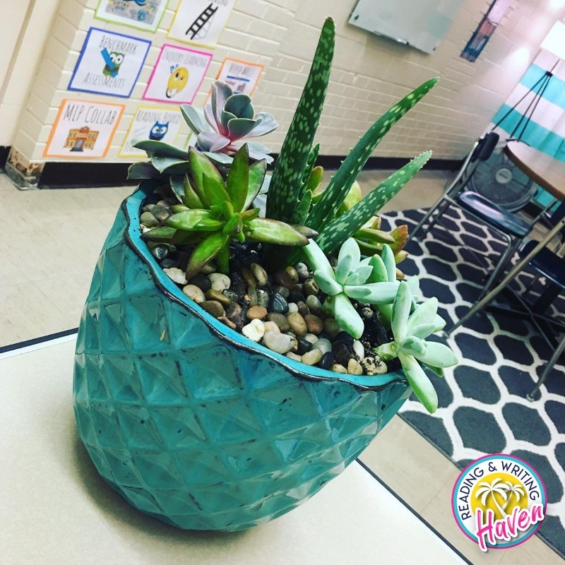 Add plants to your classroom decor!